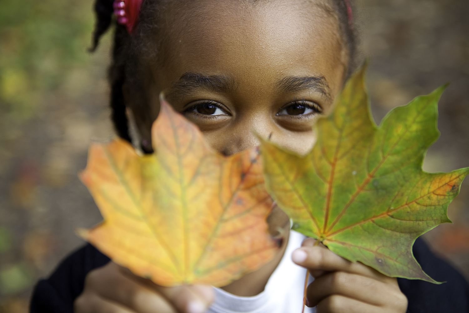 Little girl is holding leaves in the Fall at The Guild Inn Estate in Scarborough